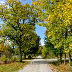 Herbst Wandern