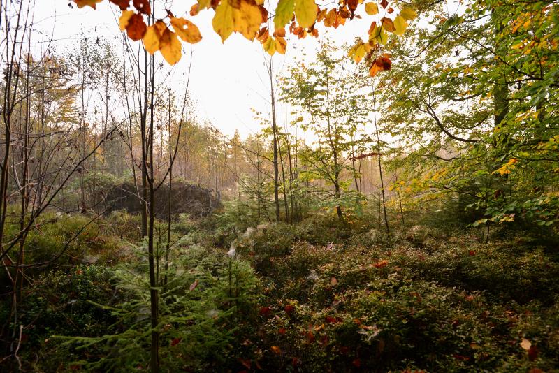 See Herbst Wandern